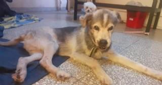 La historia de Pepe, el perro que sobrevivió al accidente en el que falleció su dueño