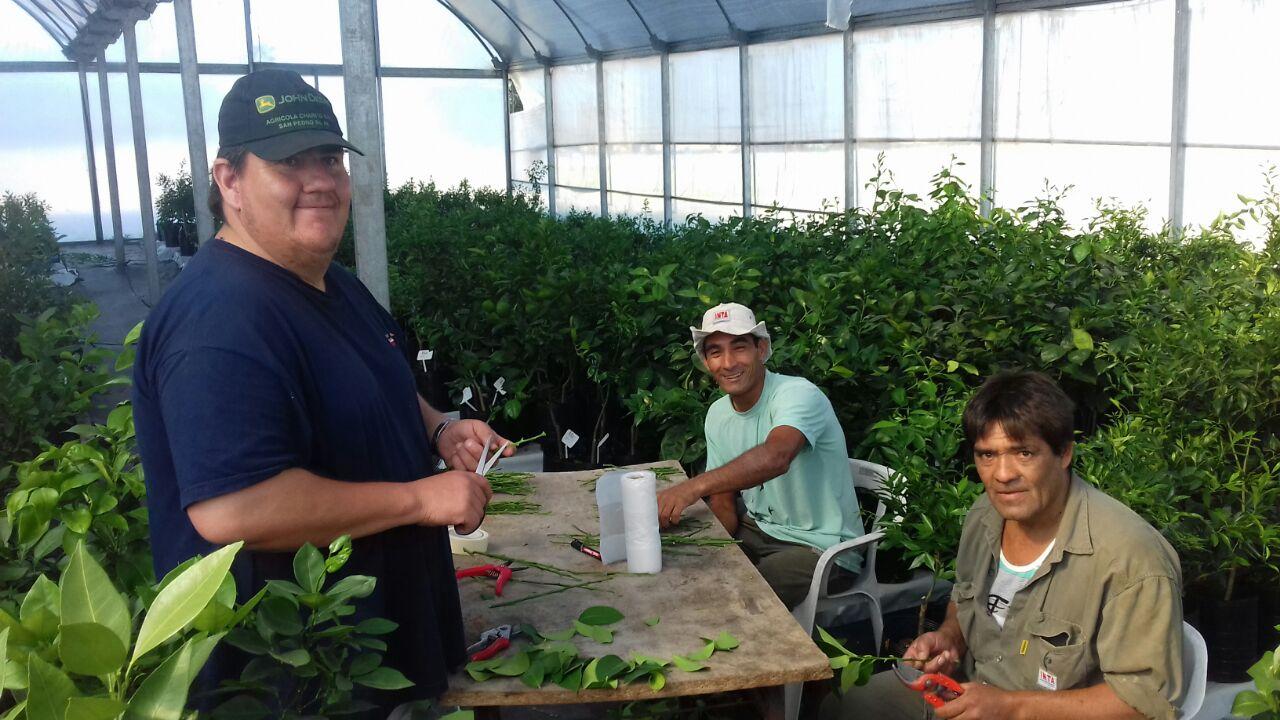 Como cada año, el INTA San Pedro pone a disposición a través de su Asociación Cooperadora, yemas de 13 variedades de cítricos y semillas de portainjerto.
