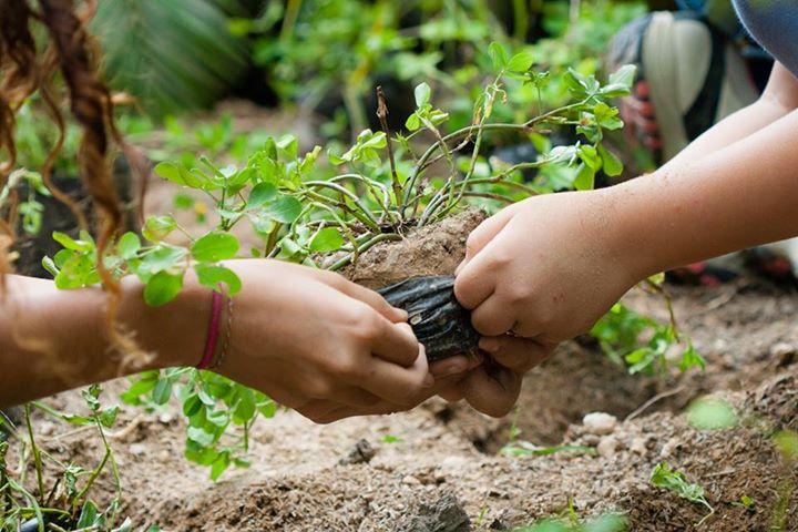 Desde el domingo se están llevando adelante diversas acciones en el Partido de Pergamino en el marco de la celebración de la Semana del Ambiente, coordinadas por la Mesa Local de Ciudades Educadoras por tercer año consecutivo.