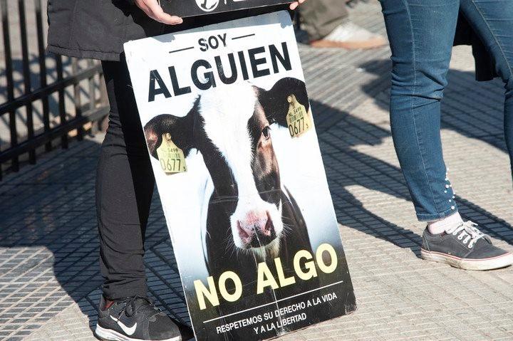 Activistas veganos se manifestaron pacíficamente en el predio que la Sociedad Rural tiene sobre la ruta 8 de la ciudad. Si bien estuvieron custodiados por la policía, los efectivos no tuvieron que intervenir porque no se registraron incidentes.