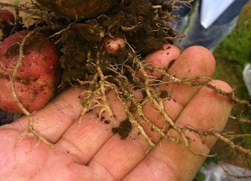 Más reclamos por los efectos dañinos de los productos lanzados por Monsanto.