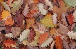Reiteradas quejas por la quema de hojas