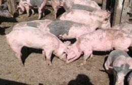 Jornada de producción porcina tendiente a cuidar la salud pública