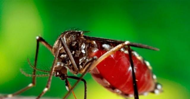 Confirman caso de dengue autóctono en nuestra ciudad