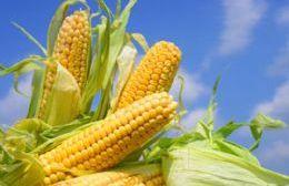 La firma sugiere aplicar un bioestimulante junto a un fertilizante para obtener una mejor nutrición y desarrollo foliar del cultivo, con la posibilidad de sumar hasta 800 kilos de rinde extra por hectárea.