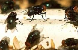 Invasión de moscas en Barrio Champagnat