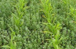 Una propuesta del Ministerio de Agroindustria de la Nación y el INTA.