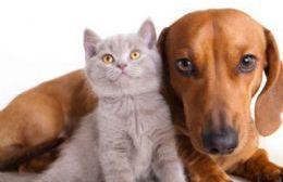 Los animales deben acudir con ayuno de sólidos.